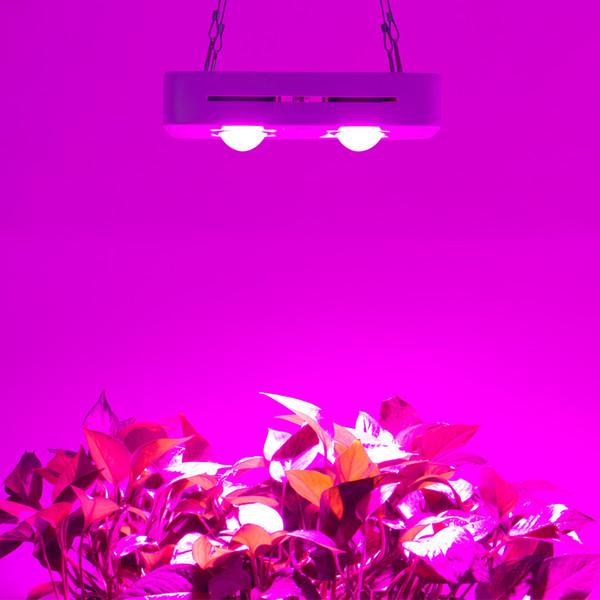 300 W COB LEVOU Crescer Luz Espectro Completo para Indoor Hydroponic Greenhouse Planta Todos Estágio de Iluminação de Crescimento Substituir UFO Crescente Lâmpada