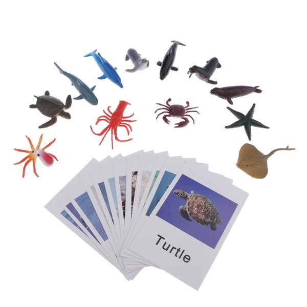 top popular Education Toy Marine Organism Model Naming Cards For Montessori Education 2020