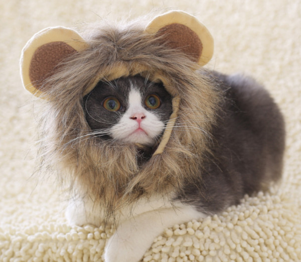 Funny Cute Pet Costume Lion Mane Wig Cap Hat for Cat Halloween Xmas Clothes Fancy Dress with Ears Autumn Winter