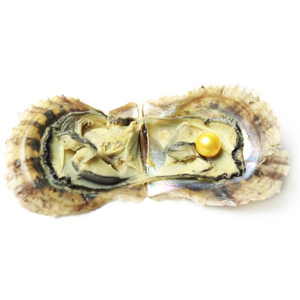 JNMM Oyster d'eau de mer avec SINGLE Edison Wish Pearls Perle Ronde Perle 11-13mm Perle Couleurs Mixtes Oyster D'eau Salée DIY Fabrication de Bijoux