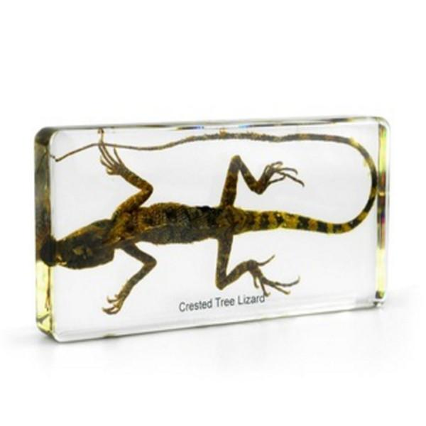 best selling Acrylic Resin Embedded Lizard Specimen Biology Teaching Appliance Kits Transparent Mouse Paperweight Student Science Learning&Education Toys