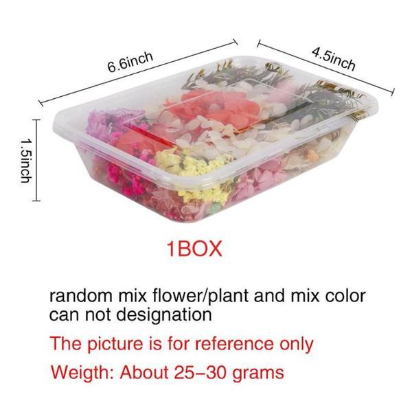 Dry Flower Mix 1 scatola