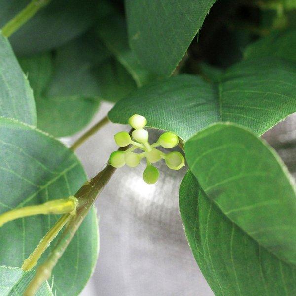 frutta verde-bianco