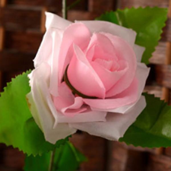 Rosa Luz