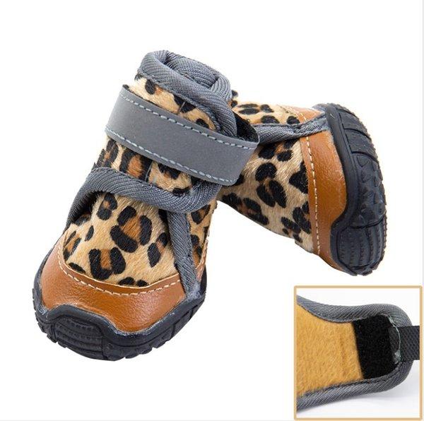 Леопард на зиму