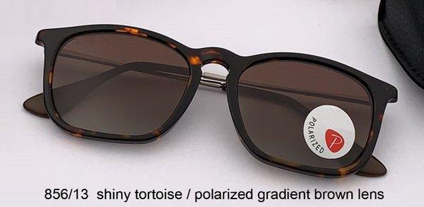 tortuga brillante / gradiente polarizado