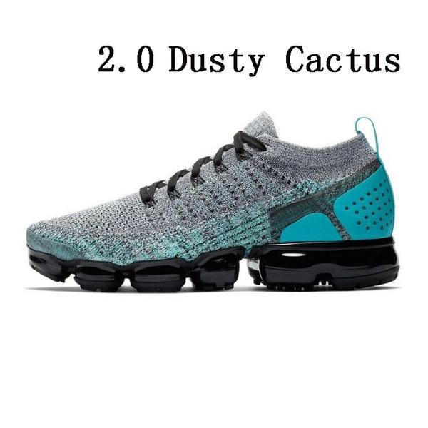 Cactus poussiéreux