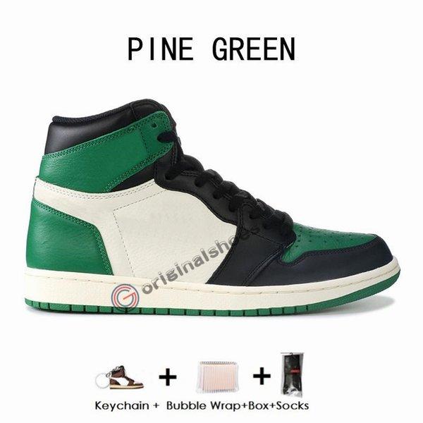 소나무 녹색