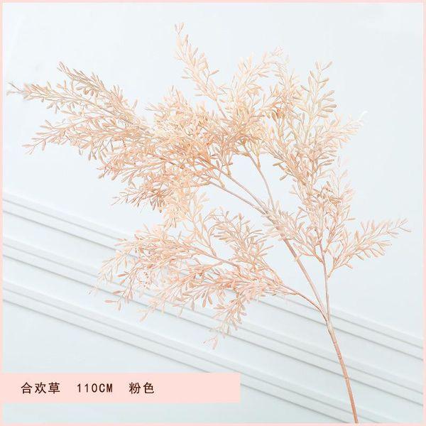 Acacia hierba rosa