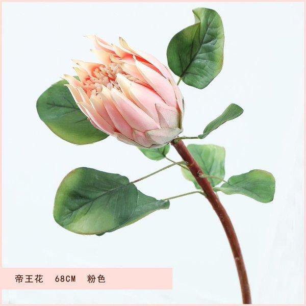 King Protea Rosa