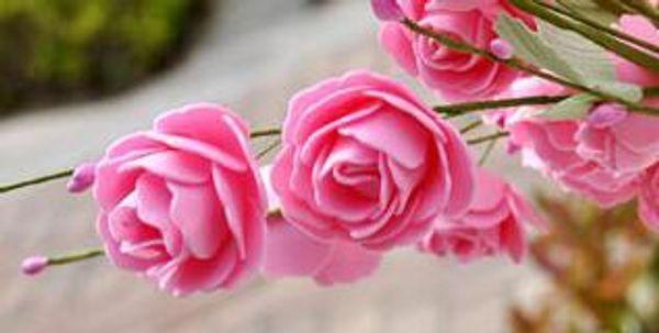 hojas verdes rosadas