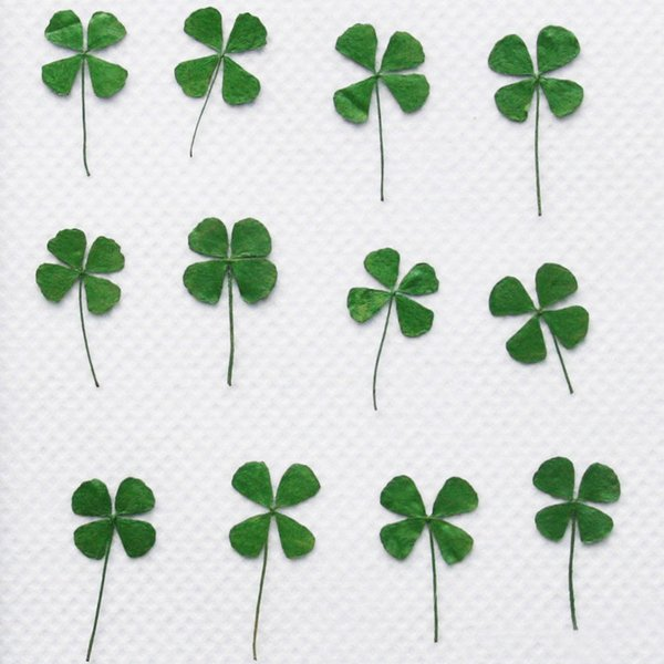New Green Clover Both Sides Mini Leaves Dried Pressed Flower For Christmas Decoration Drop Shipping free shipment 120pcs