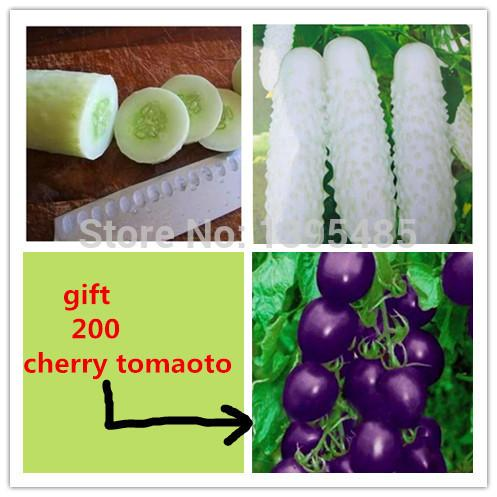 100 white Cucumber ,send 200 purple tomato as gift ,Cuke Seeds,Green Vegetable Seeds Fruit Seed Vegetable Seeds free shipping