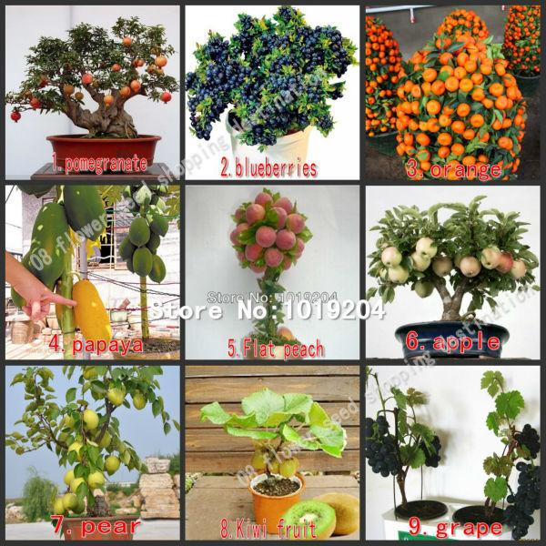 590PC mini bonsai fruit seeds, peach, kiwi, pomegranate, apples, pear, grapes, blueberries, papaya, orange tree seeds-9 package