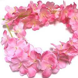 5 rosa