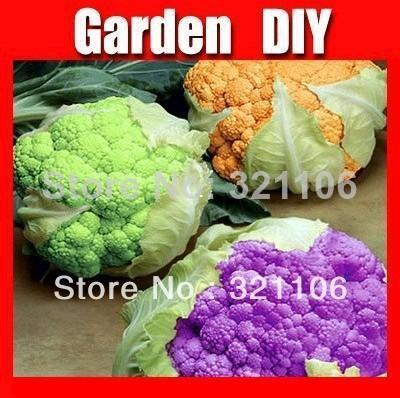 200 Seeds Non Hybrid Broccoli Waltham vegetables Free shipping