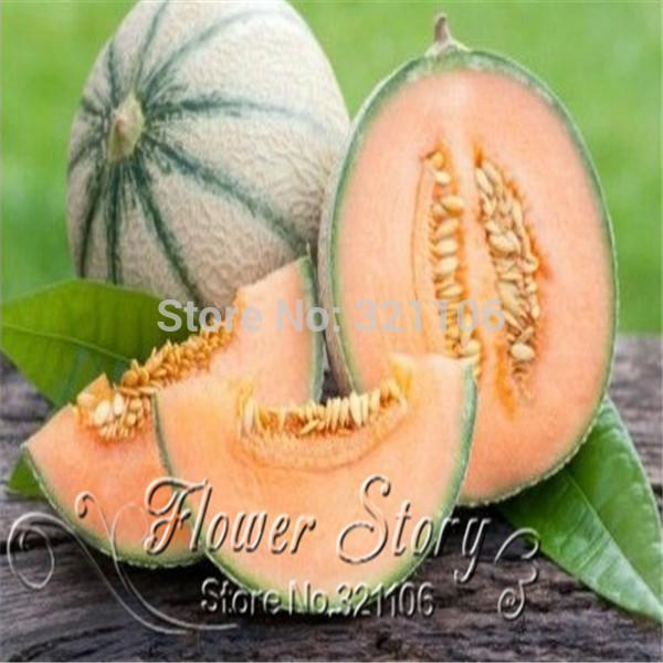 40 Seasons cantaloupe melon seed sowing vegetable seeds fruit seed planting sweet crispy balcony free shipping