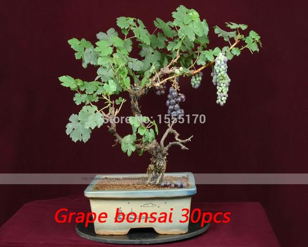 30 PCS, Graine de raisin Espèce rare Bonsaï Fruit de raisin, Jardin de bricolage, facile à cultiver, Bonsaï de raisin rare