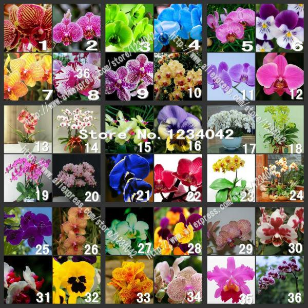 200PC butterfly orchid seeds, 36 varieties of beautiful bonsai flower seeds, Senior ornamental orchid plants