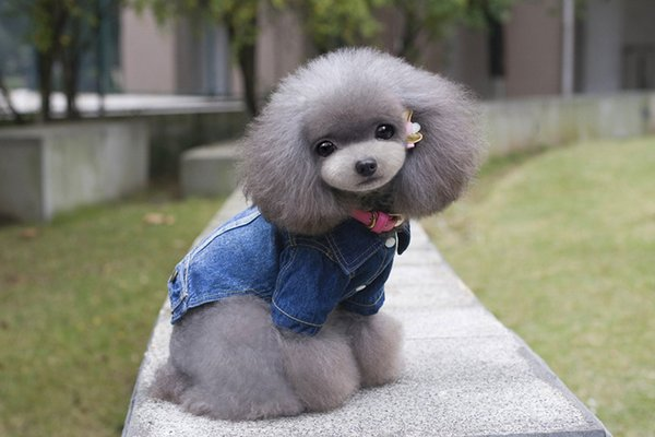 Free shipping dog appael male puppy dog jeans coat sky blue color dog winter clothes 1pcs a lot factory sale