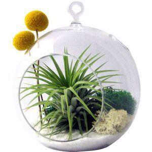 6 inch hanging planter glass terrarium,indoor plant succulent terrarium,flower pots for garden decor,home decoration,wedding decor