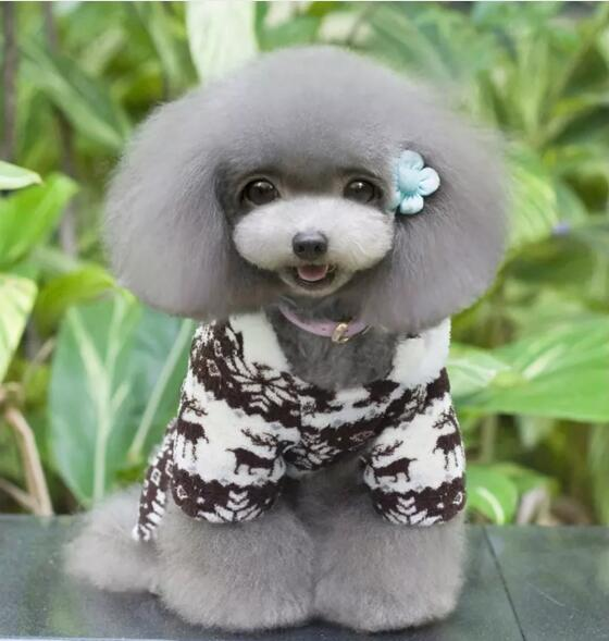 New pattern pet dog thickening winter clothes t-shirt puppy pullover knitted elastic dog simple casual wear