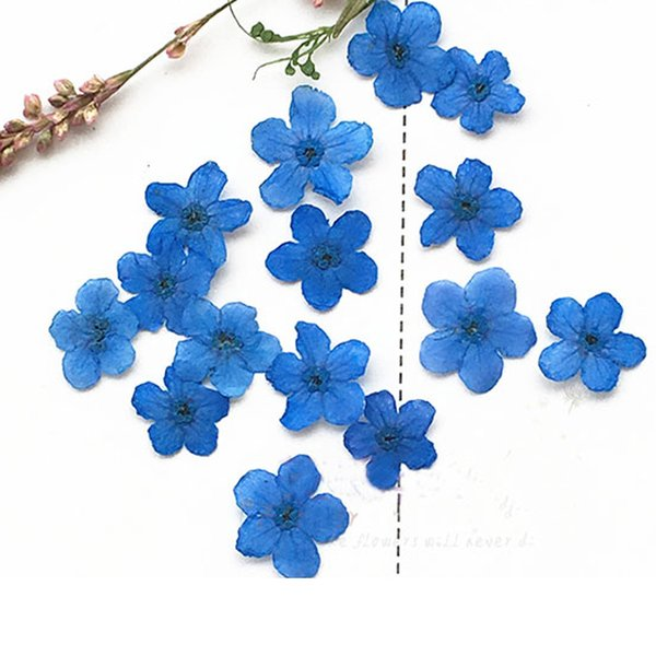 Dye Blue Myosotis Pressed Dried Flower Wedding Decoration Gift Cards For Card Decoration Bulk Packing 100Pcs Wholesale Free Shipment