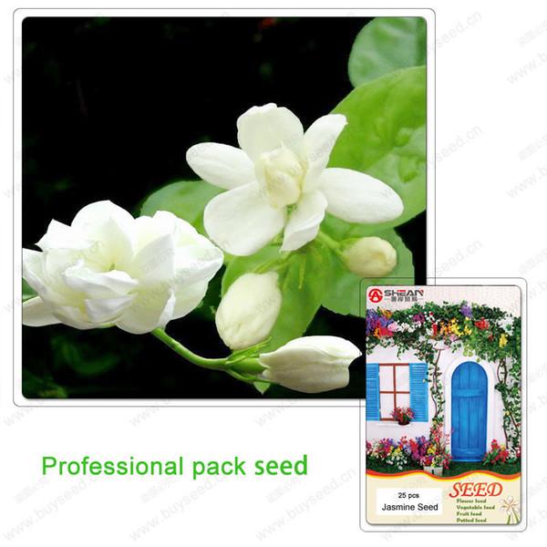 Semillas de jazmín Plantas de bonsai para interiores Semillas de flores perennes Hermosas semillas de flor de jazmín blancas puras 25 PCS / Pro Pack