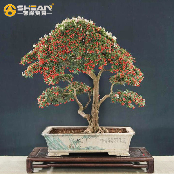 A Pack 10 Pcs Cherry Tree Seed Balcony Garden Fruit Bonsai Potted Plant Seed Green Bonsai Cherry Fruits Seed