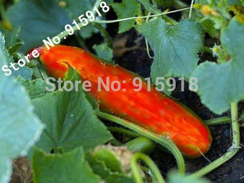 30PCS Rare Red Cucumber Seeds Cucumis Sativus Vegetable Seeds Home Garden