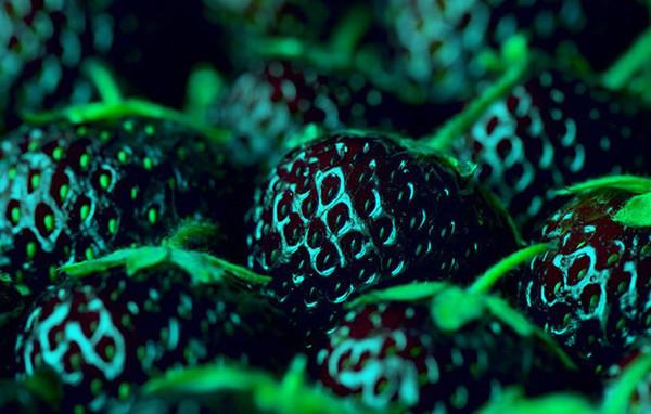 1 beutel = 300 STÜCKE HEIßER VERKAUF Schwarze Erdbeersamen Bonsai Seltene Fruchtsamen klettern PFLANZE ORGANIC Hausgarten Exotisch kostenloser versand