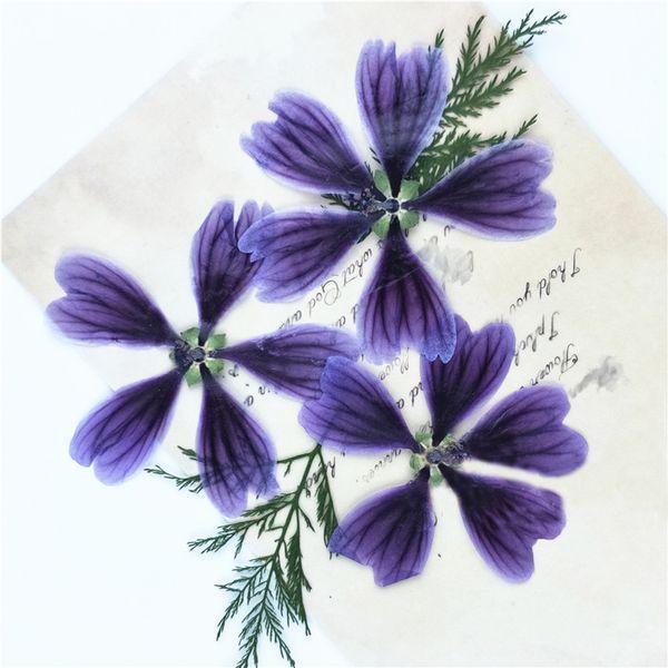 Dark Purple Dried Hollyhock Flowers , Pressed Flower Artwork For Aroma Wax Tablets 100Pcs Wholesales