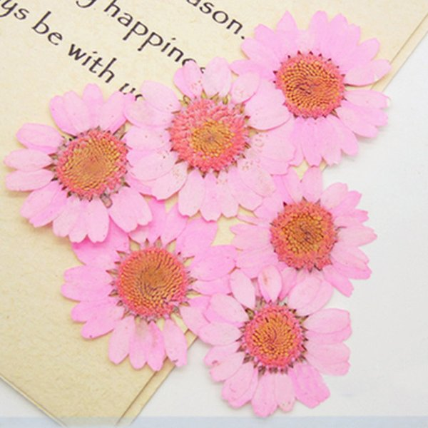 Factory Supply 16 Different Colors Medium Size Chrysanthemum 2.5-3CM Natural Real Pressed Flowers For Card Decoration Drop Shipment 120 Pcs
