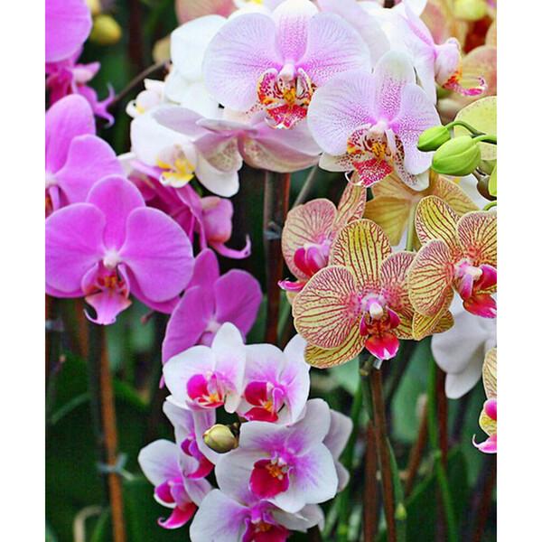Diamond embroidery home decor full square drill Diy Diamond Painting craft mosaic orchid living sticker 30X36CM HWC-530