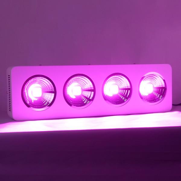 Coppa riflettore 800w COB Led Grow Kit luce Serra Sistemi idroponici Fornitura diretta in fabbrica con 2 anni di garanzia