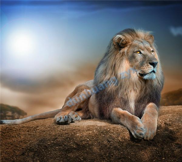 100% tondo pieno area evidenziare diamante cucito fai da te diamante pittura punto croce kit diamante ricamo animale leone 077 spedizione gratuita