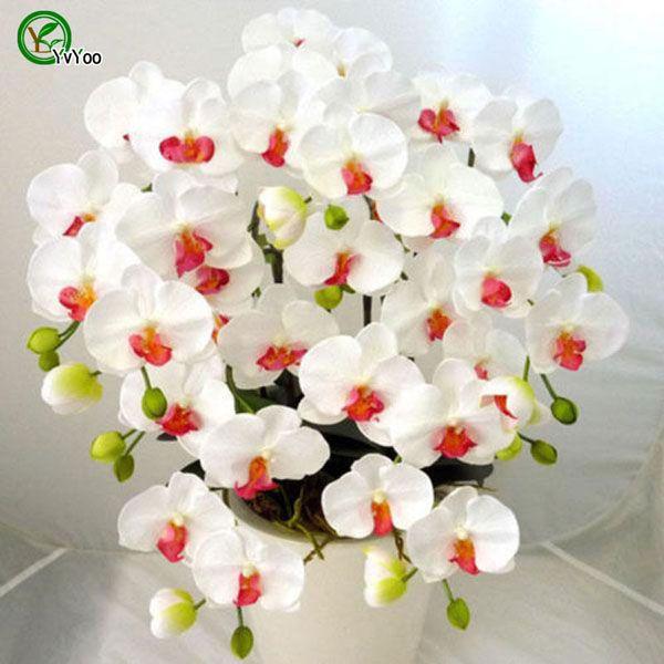 Güve orkide Bonsai Çiçek Tohumları Çiçek Tohumları Bonsai Bitki Ev Bahçe için 30 Parçacıklar / lot u011