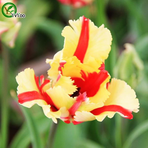 Acquista Bellissimi Semi Di Iris Semi Di Fiori Bonsai Piante In Vaso Fiori 30 Particelle Sacchetto A018 A 2 02 Dal Huangyonbo Dhgate Com