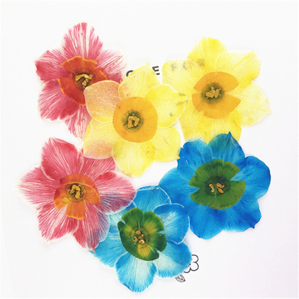 2018 Dye Absorption Narcissus Framed Dried Flowers 4CM Diameter, DIY Pressed Flowers For Epoxy Cell Phone 80Pcs Free Shipment