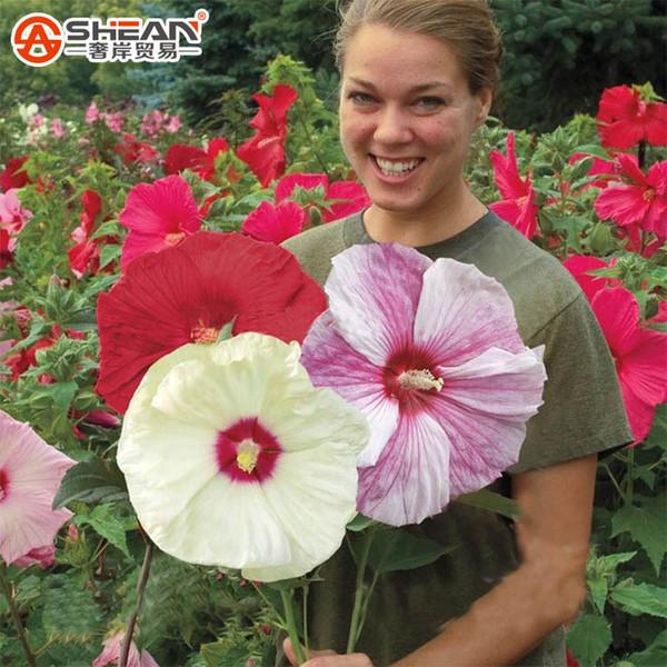 Dev Hibiscus Çiçek Tohumları Bahçe Ev Çok Yıllık Saksı Bitkileri Çiçek Bamya Hibiscus Bonsai Çim Tohumu 50 Adet / grup