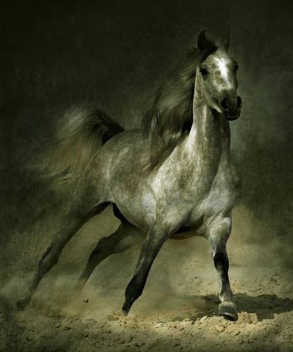 Enmarcado caballo árabe galope en el paisaje, artesanía pura pintura al óleo abstracta del arte animal en lienzo de calidad tamaños múltiples, envío gratis