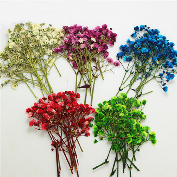 Newest Gypsophila Press Flower, Baby's Breath Dried Pressed Gifts Candle 10bags/100Pcs For Garden Decorative DIY Teaching Specimen