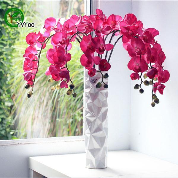 mix Moth orchid Seeds Bonsai Flower Seeds Potted Plants Flowers 30 Particles / Bag E024