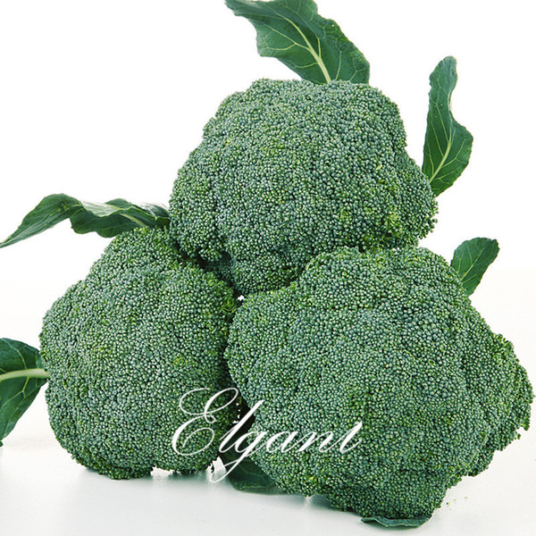 Broccoli Vegetable 100 Seeds Easy-growing Popular Non-Gmo Heirloom Vegetable Seed