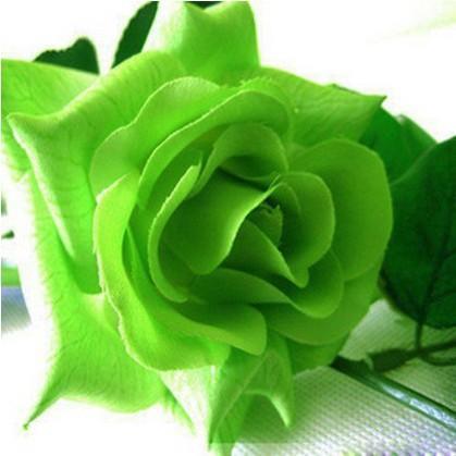 Grüne Rose Blumensamen Bonsai Blume für Zimmer Innen Samen 100 Partikel / lot