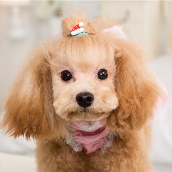 The supply of new pet hair ring Korean cute Christmas band dog pattern flower jewelry wholesale accessories 50pcs