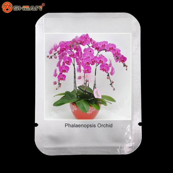 50 Stück Regenbogen Phalaenopsis Samen, Topfpflanzen, gemischte Farben, so schön und einfach wachsen