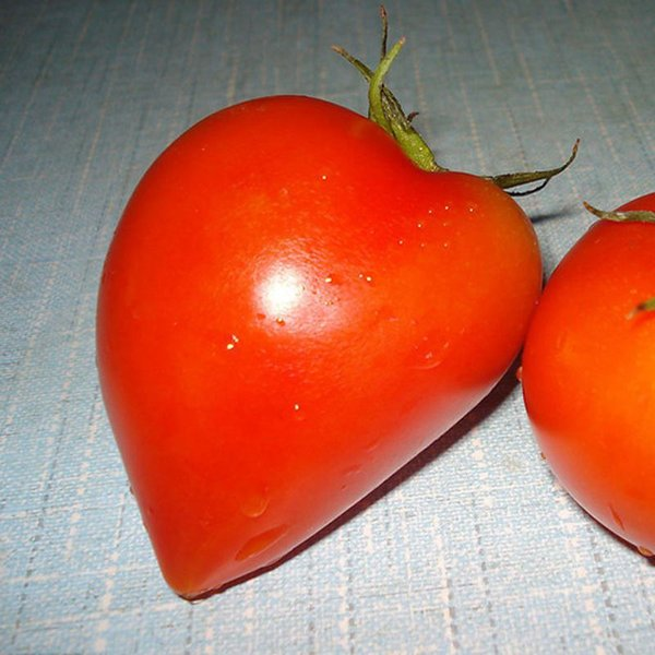 A Package 100 Pcs Red peach tomatoes Seed Balcony Fruits Vegetables Bonsai Potted Plant Seeds Tomato Seed