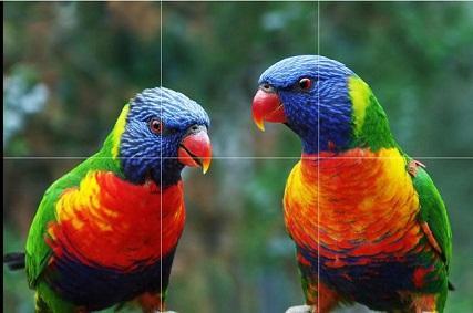 Loros loros del arco iris aves exóticas, Puro pintado a mano Moderno Decoración de pared Arte animal Pintura al óleo sobre lienzo grueso. Múltiples tallas jóvenes