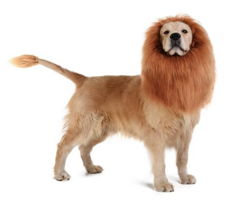 Lion Mane Wigs for Large Dog Cat, Pet Cosplay Costumes Dog Cat Wigs Cute Halloween Pet Wigs with Ears, Lion Mane Fancy Dress Dog Headgear Fe